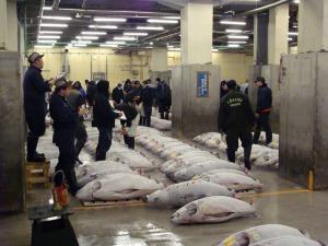 Auction room at Tsukiji