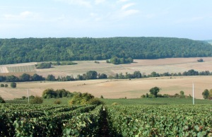 Pinot Meunier vineyards in Vallée de la Marne