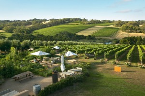 Montalto Winery and Olive Grove at Shoreham on Victoria's Mornington Peninsula
