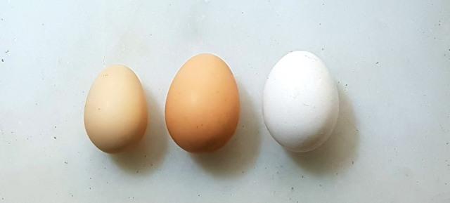 Desi, Happy Hen and Industrial farm eggs